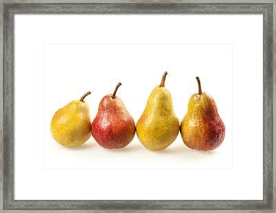 Row Of Pears Framed Print by Elena Elisseeva