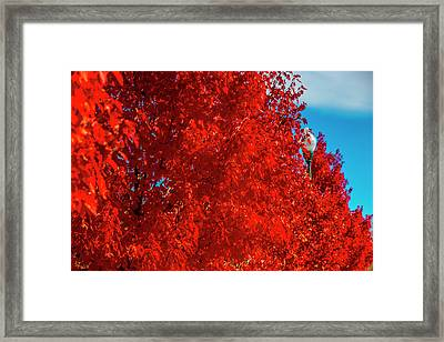 Row Of Red Autumn Trees Framed Print