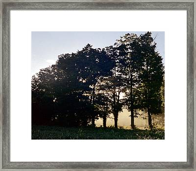 Row Of Trees Framed Print