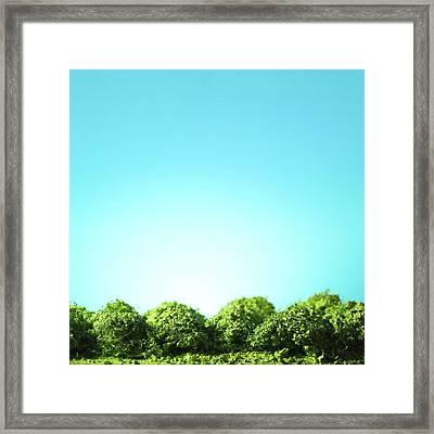 Row Of Trees Framed Print