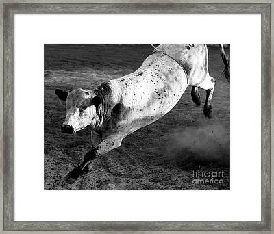 Rowdy Bucking Bull Framed Print
