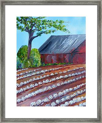 Rows Of Cotton Framed Print