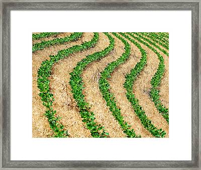 Rows Of Green Framed Print