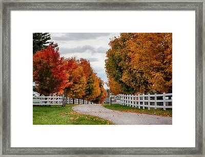 Rows Of Maples In Fall Colors Framed Print by Jeff Folger