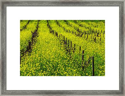 Rows Of Mustard Grass Framed Print by Garry Gay