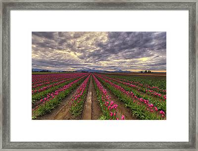 Rows Of Pink Impressions  Framed Print by Mark Kiver