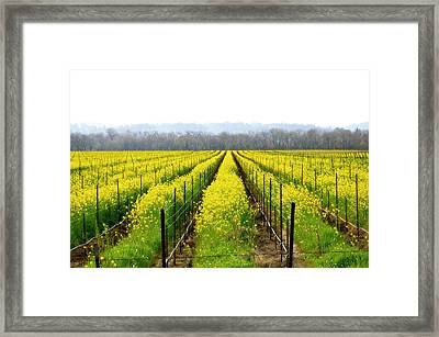 Rows Of Wild Mustard Framed Print by Tom Reynen