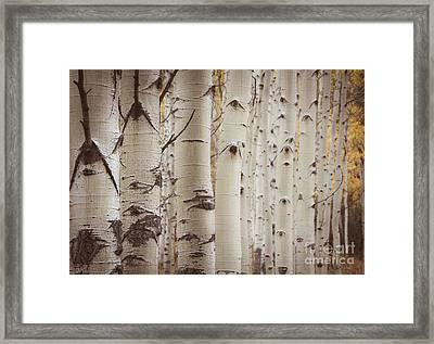 Framed Print featuring the photograph Rows by The Forests Edge Photography - Diane Sandoval