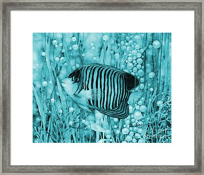Royal Angelfish On Blue Framed Print