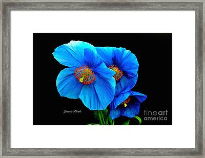 Royal Blue Poppies Framed Print by Jeannie Rhode
