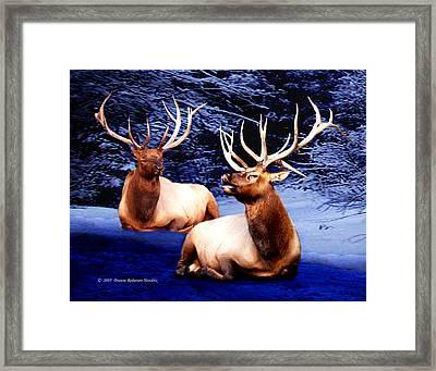 Royal Elk Framed Print by Dianne Roberson