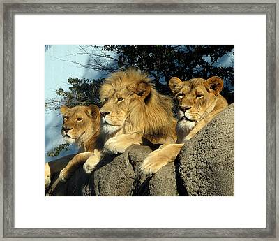 Royal Family Framed Print