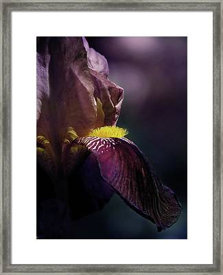 Royal Flush Framed Print