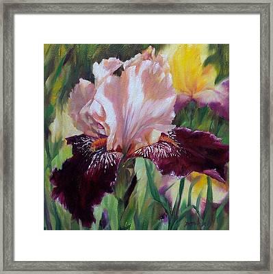 Royal Iris Framed Print by Donna Munsch