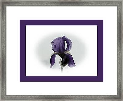 Royal Iris Framed Print by Marsha Heiken