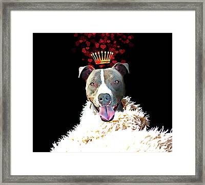 Royal Love Pup, Pit Bull Terrier, Crown Of Hearts Framed Print