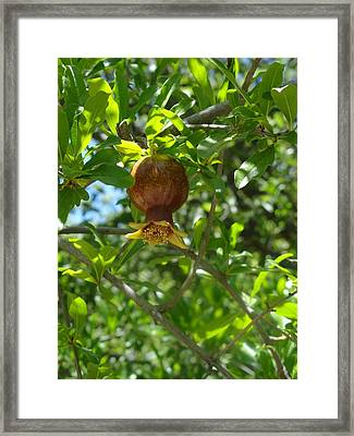 Royal Onion Pomegranate Framed Print