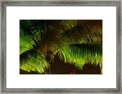 Royal Palm Night Out Framed Print