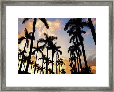 Royal Palm Way Framed Print