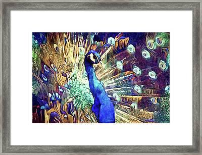 Royal Peacock Framed Print