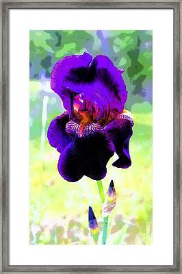 Royal Purple Iris Image Framed Print by Paul Price