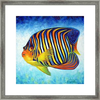 Royal Queen Angelfish Framed Print by Nancy Tilles