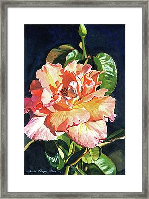 Royal Rose Framed Print by David Lloyd Glover