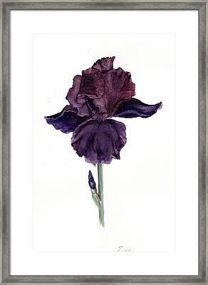Royal Ruffles Framed Print by Susan Tilley