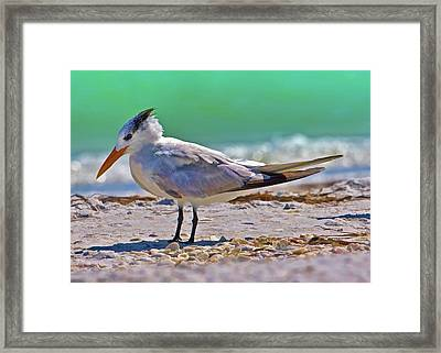 Royal Stance Framed Print by Delores Knowles