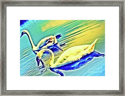 Royal Swans In The City Moat Framed Print