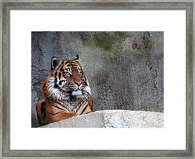 Royality Framed Print