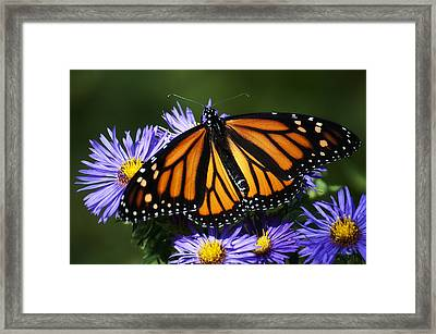 Royalty  Framed Print by Ross Powell