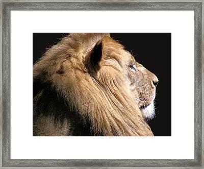 Royalty Framed Print by Scott Hovind
