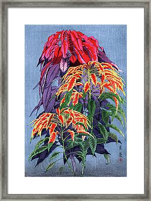 Roys Collection 6 Framed Print