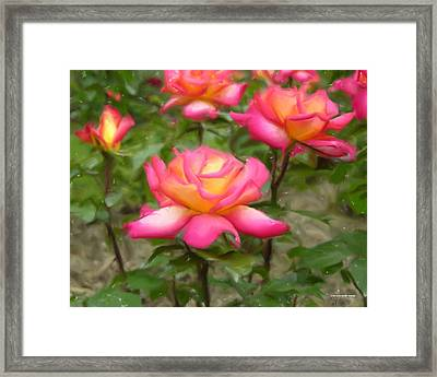 r.'Rainbow Sorbet' 86384d Framed Print