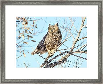 Owlish Framed Print