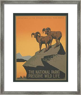 Rreserve Wildlife Framed Print