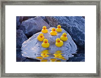 Rubber Ducks In The Wild Framed Print