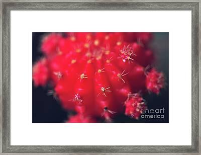 Ruby Ball Cactus Framed Print by Joan McCool