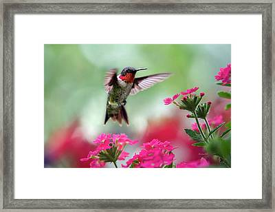 Ruby Garden Jewel Framed Print by Christina Rollo