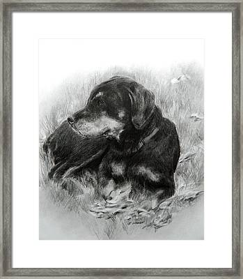 Framed Print featuring the drawing Ruby by Meagan  Visser
