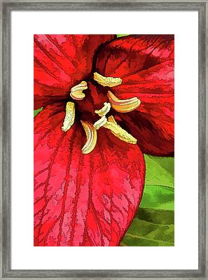 Ruby Red Trillium Framed Print