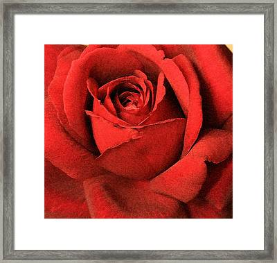 Ruby Rose Framed Print by Marna Edwards Flavell