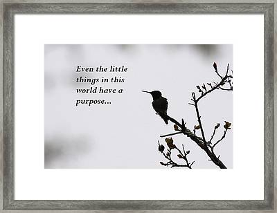 Ruby-throated Hummingbird - Little Things Framed Print