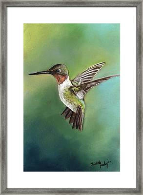 Ruby Throated Hummingbird Framed Print by Charlotte Yealey
