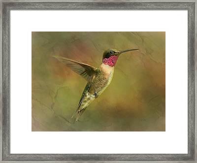 Ruby Throated Hummingbird Inflight Framed Print