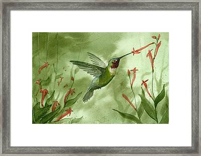 Ruby Throated Hummingbird Framed Print by Sean Seal