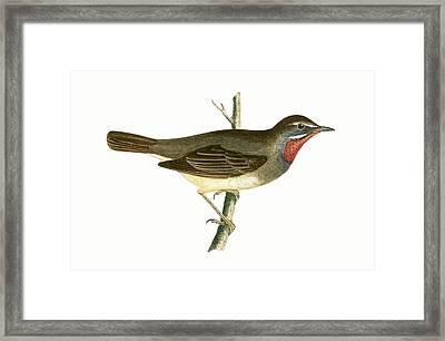 Ruby Throated Warbler Framed Print