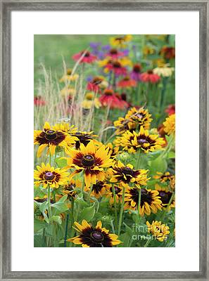 Rudbeckia Sonora  Framed Print by Tim Gainey