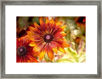 Rudbeckias With Sparkly Bokeh Framed Print by Maria Janicki